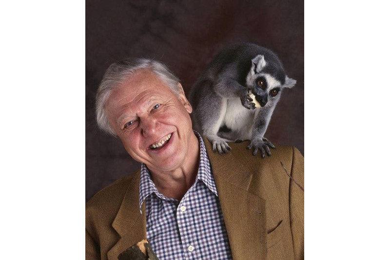 Attenborough with a hungry ring-tailed lemur (BBC)