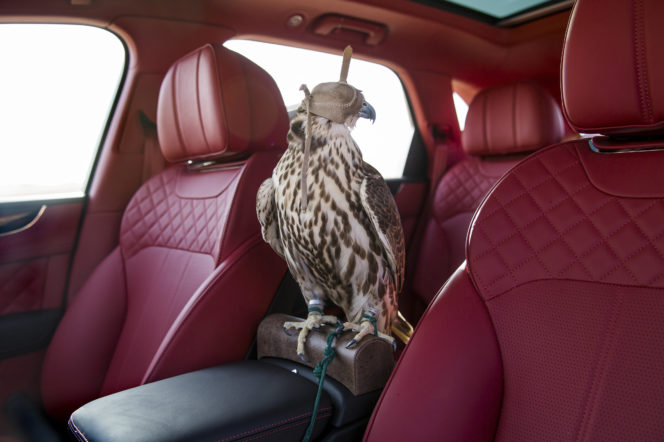 Arabian Flights: Inside the lucrative world of Middle-Eastern falconry