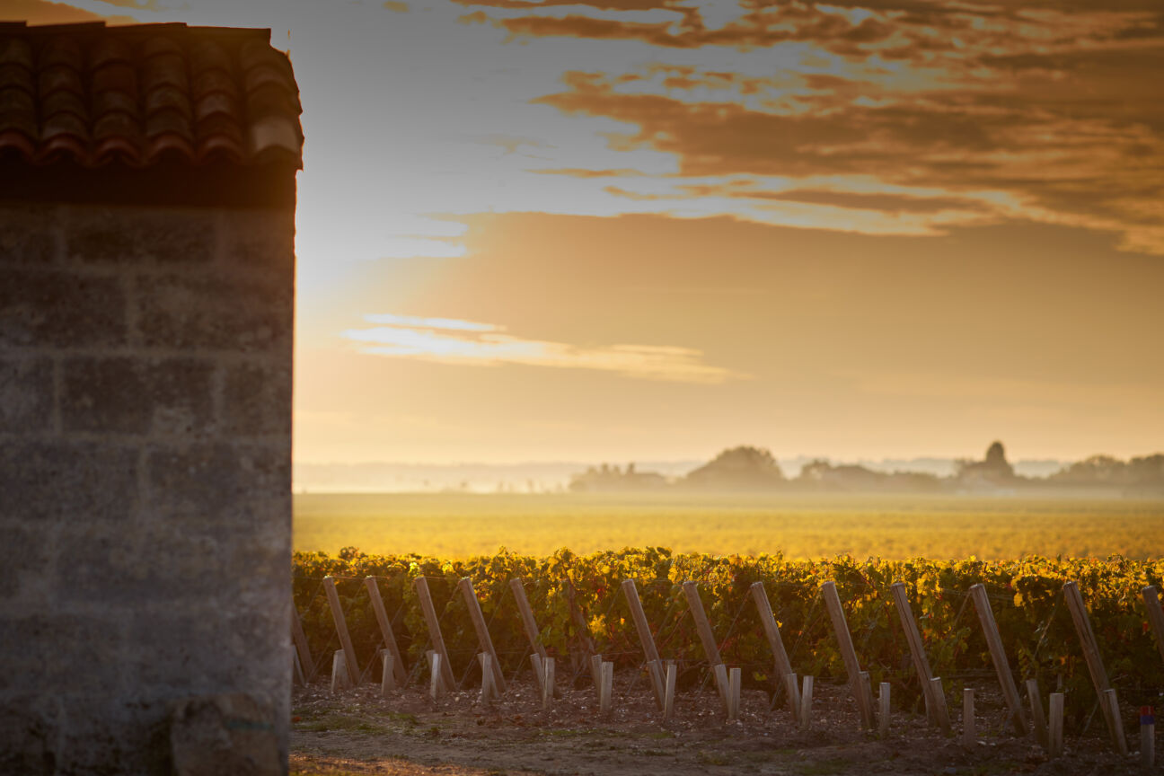 Forget machines and target markets – emotion is the key ingredient in great wine
