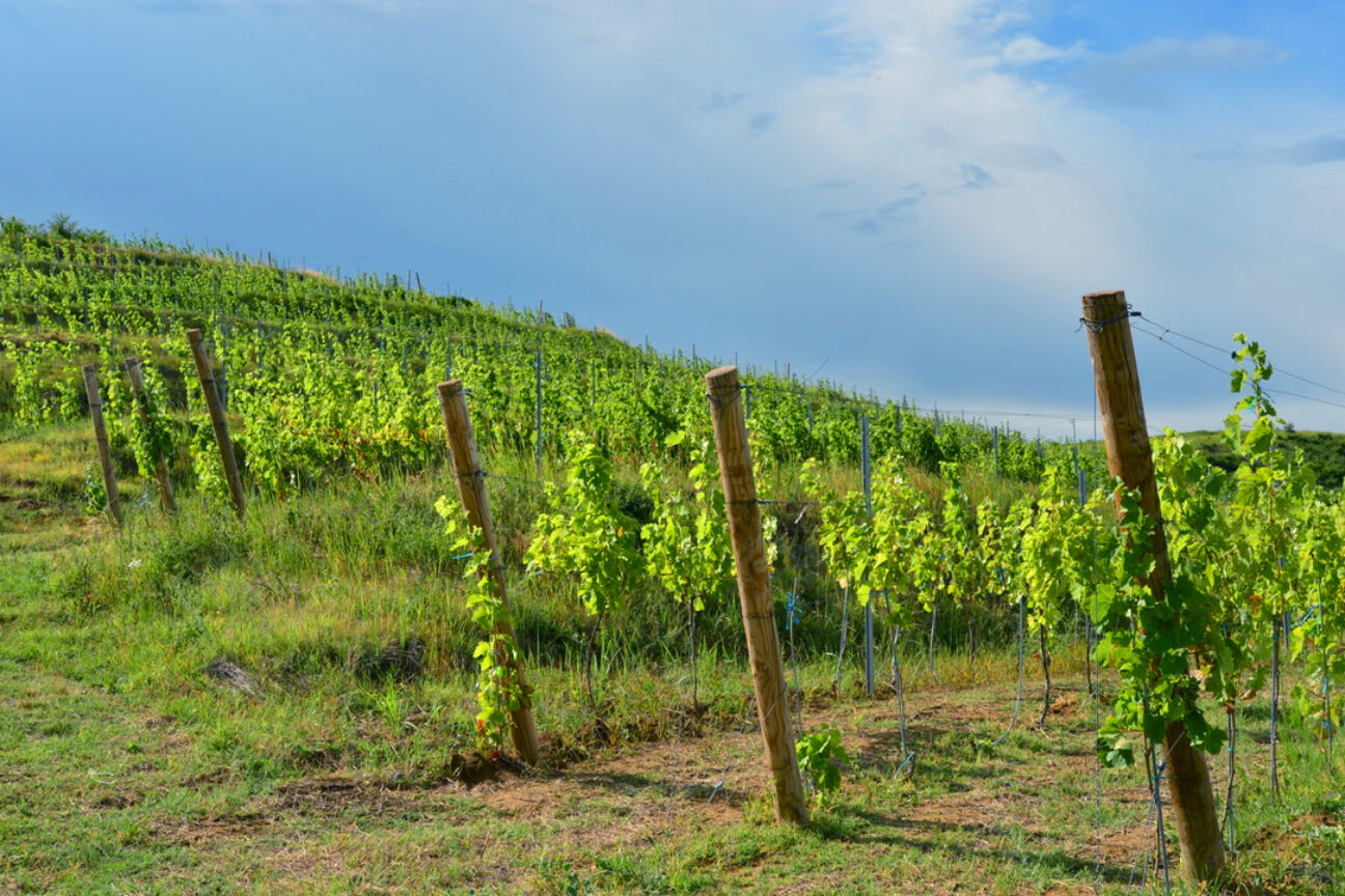 Romania is the next stop for luxury wine tourism