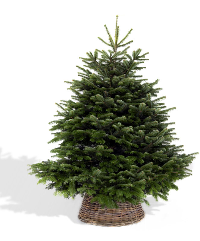 Competition: Win a hand-delivered, premium Christmas tree