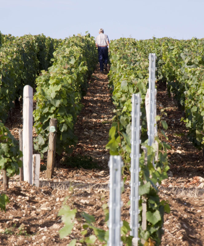 Your guide to Burgundy 2017: a vintage worth savouring