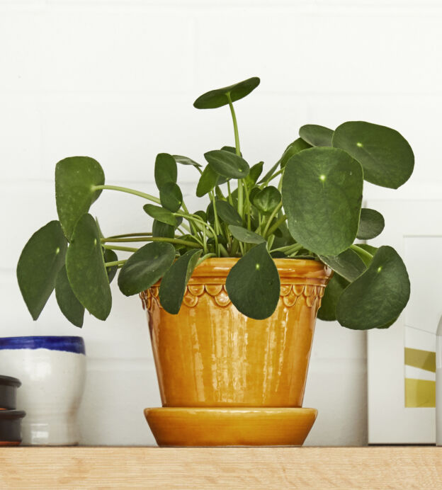 These are the best desk plants for increasing productivity